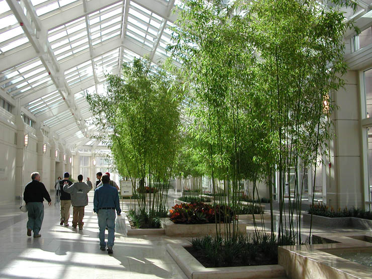 Bamboo Sales And Landscaping Victoria Bc