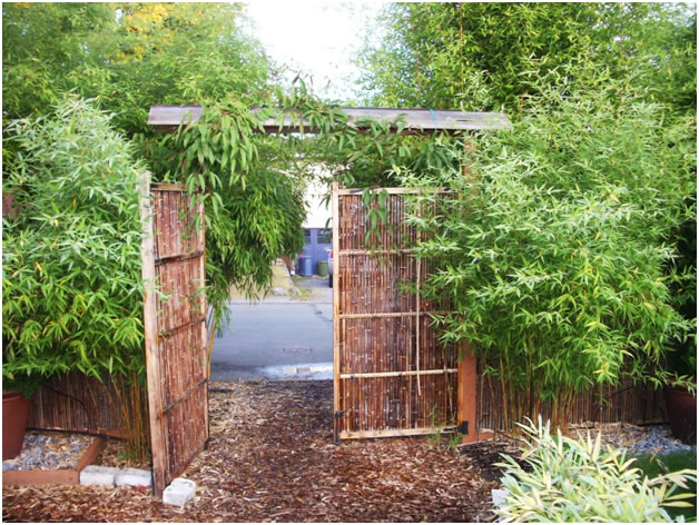 Garden Design Victoria Bc garden design: garden design with bamboo sales and landscaping